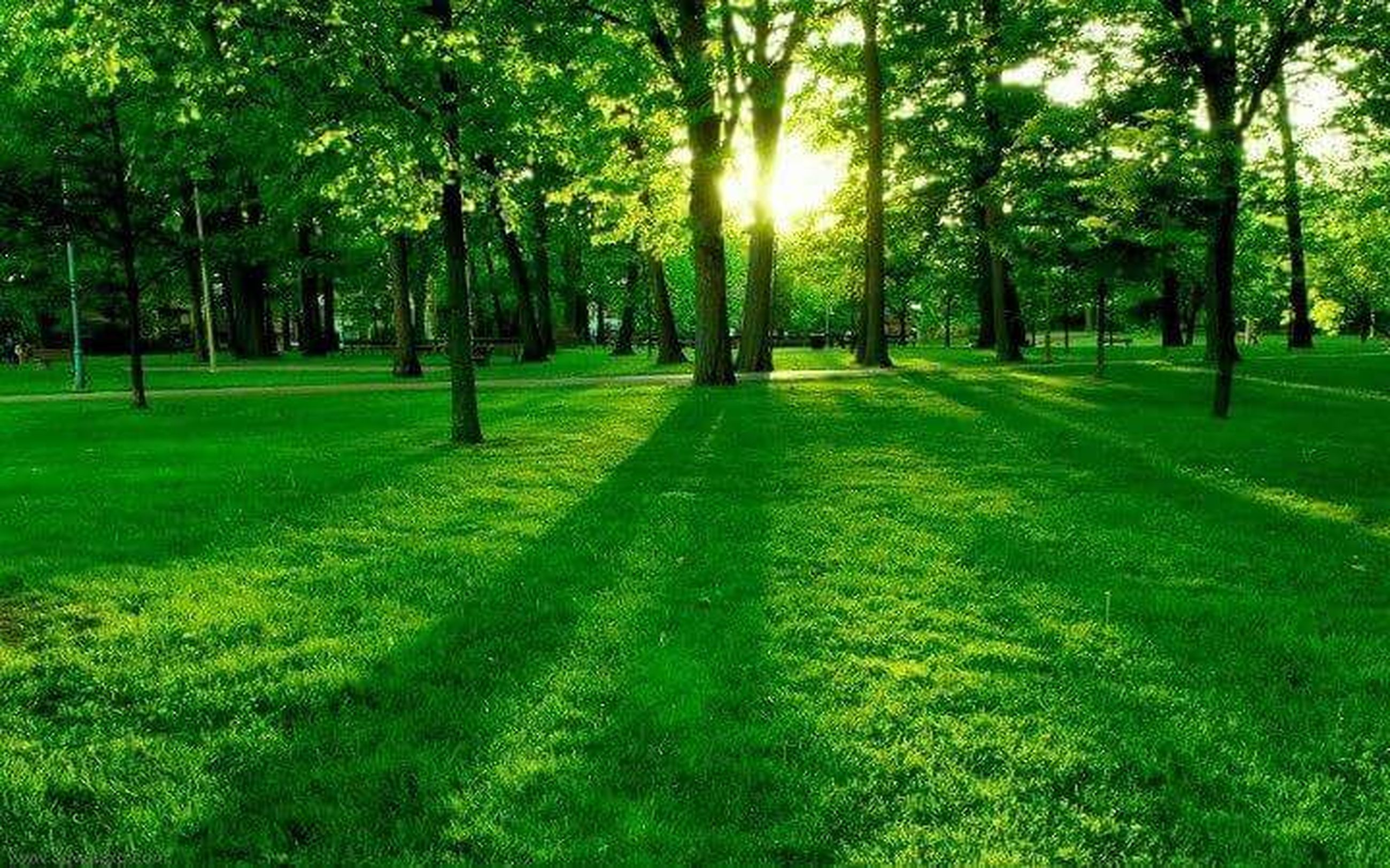 tree, grass, green color, growth, sunlight, tranquility, grassy, tranquil scene, nature, beauty in nature, shadow, field, park - man made space, tree trunk, scenics, landscape, sunbeam, lawn, sun, park