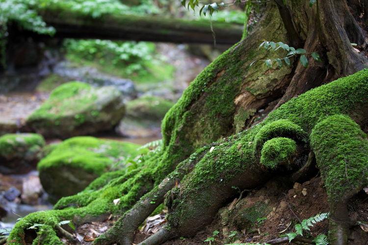 瓜割の滝3 Japan Photography Forest Small Falls Fall Beauty From My Point Of View Capture The Moment Fukui Prefecture Green Color