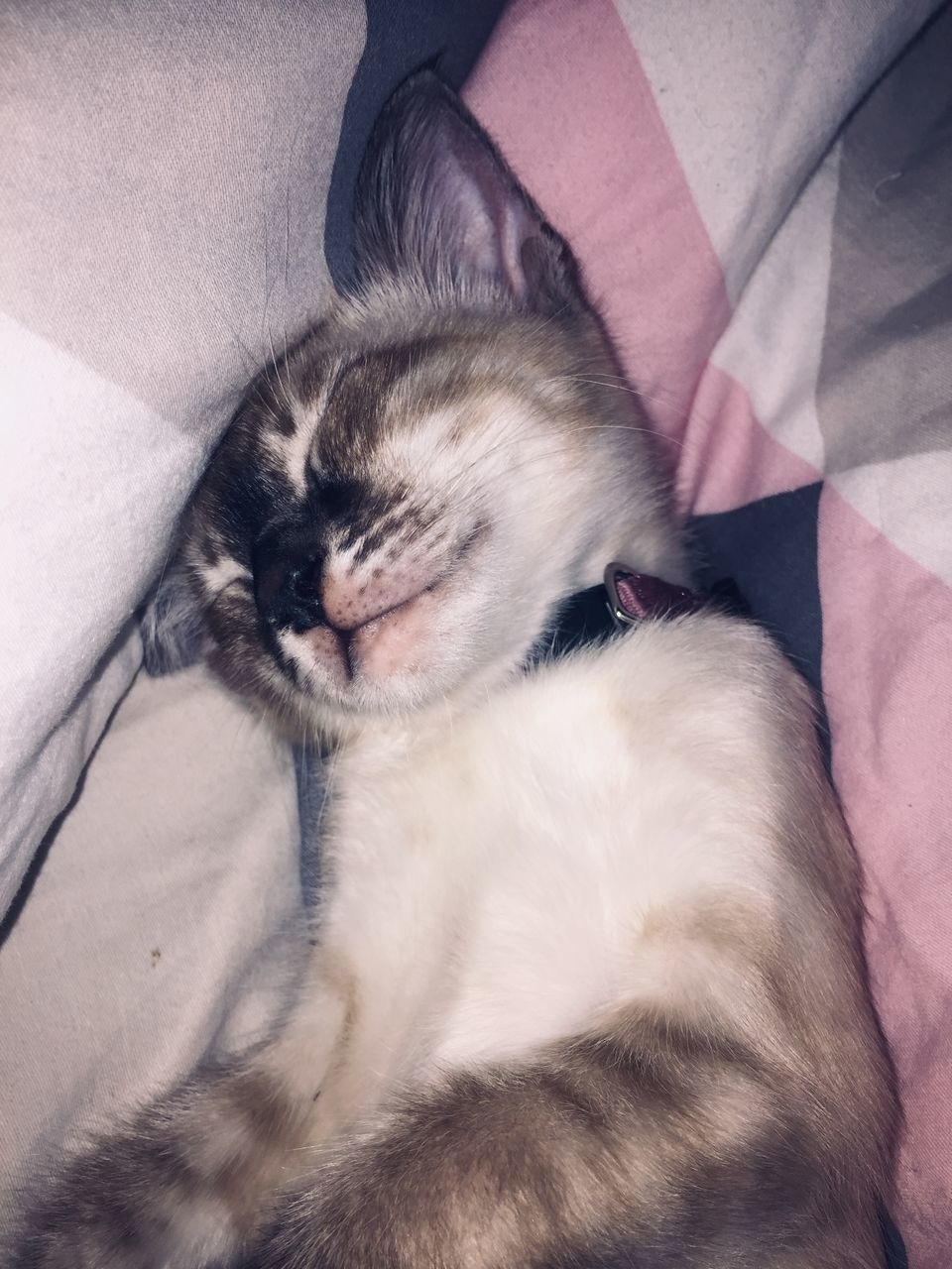 pets, domestic animals, domestic, mammal, one animal, animal themes, animal, vertebrate, relaxation, domestic cat, eyes closed, sleeping, resting, cat, furniture, indoors, feline, lying down, high angle view, one person, whisker, animal head, pet owner, napping
