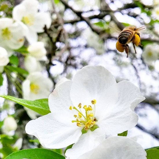 Bee Busybee Flower Fullload Spring nature