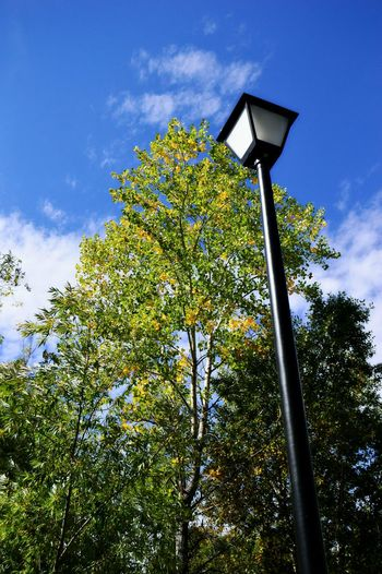 Light pole All In The Park Green Color Lamp Post Low Angle View Near A Stream One Of Many Light Poles Sky Tall - High
