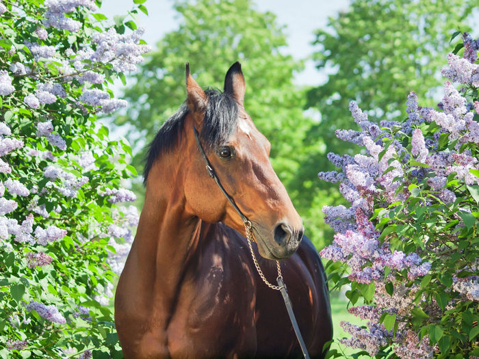 Animal Themes Close-up Day Domestic Animals Flower Horse Livestock Mammal Nature No People One Animal Outdoors Tree