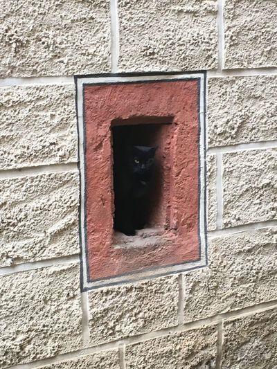 Black Cat Burg Katze