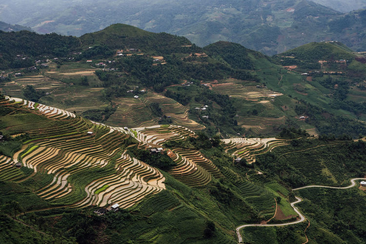 Aerial view of terraced field