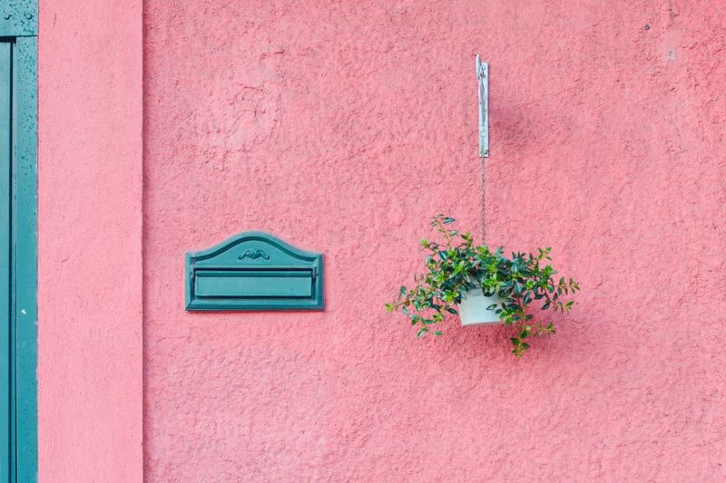 Close-up of plant on pink wall of building