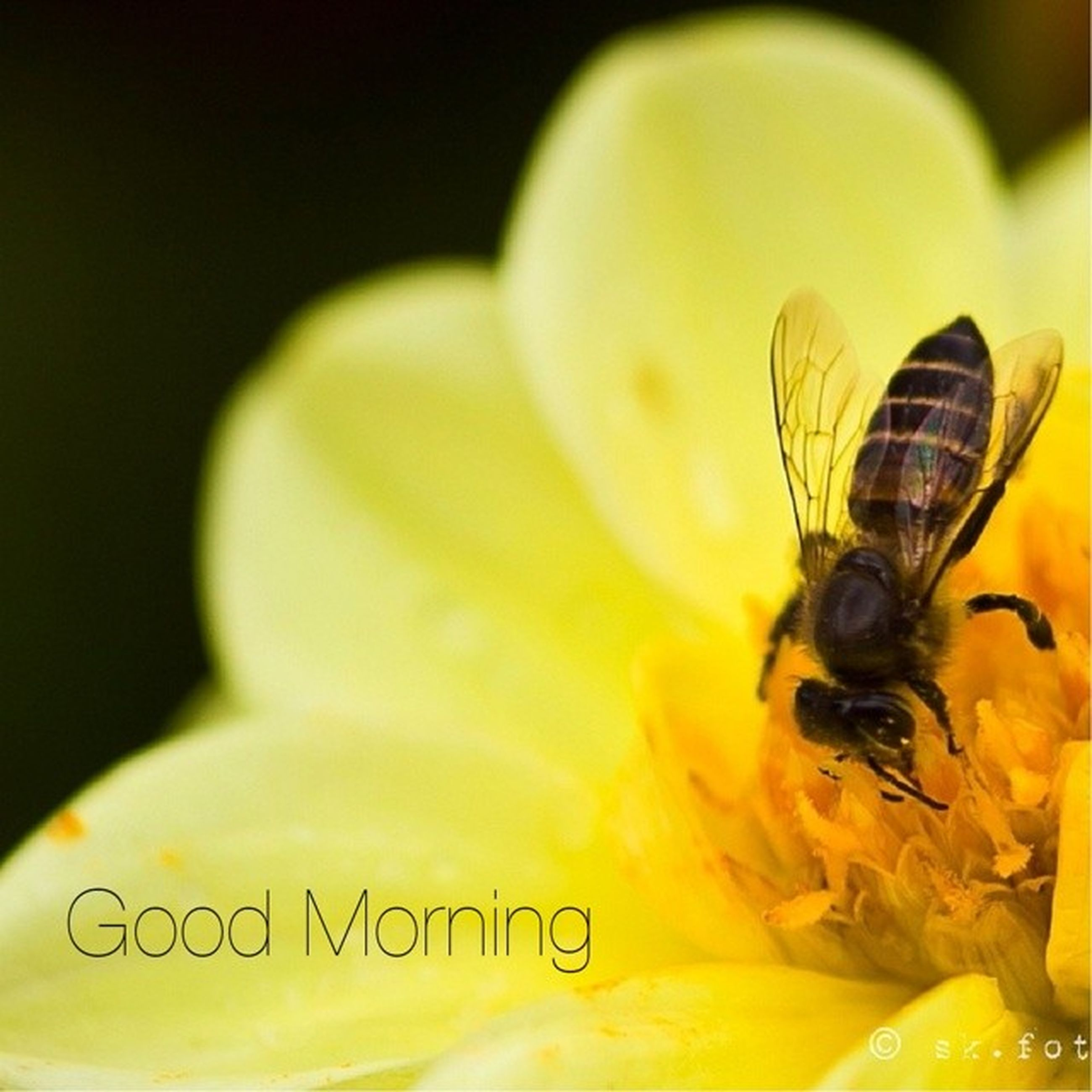 flower, petal, yellow, flower head, close-up, fragility, freshness, single flower, beauty in nature, pollen, selective focus, extreme close-up, nature, growth, focus on foreground, stamen, studio shot, insect, blooming, indoors