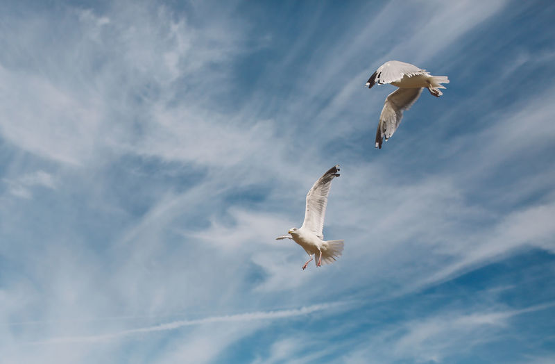 Low Angle View Of Seagulls Flying Against Cloudy Sky