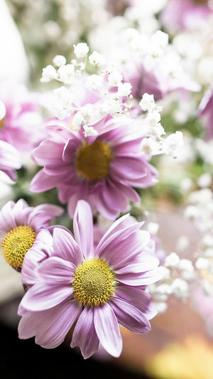 Flowering Plant Flower Freshness Fragility Plant Vulnerability  Beauty In Nature Petal Pink Color Growth Flower Head Close-up Inflorescence Nature Focus On Foreground Day Pollen No People Outdoors Selective Focus Backgrounds