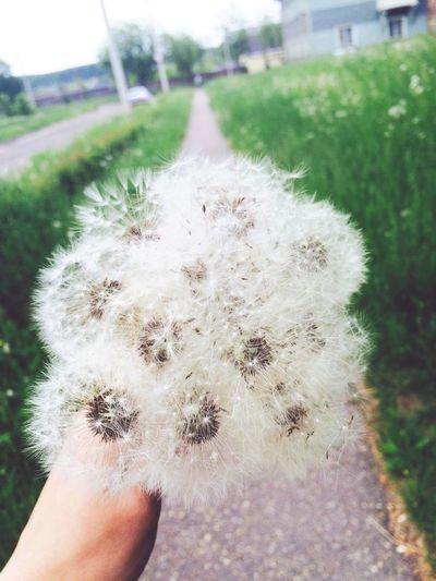 Nature Hello World