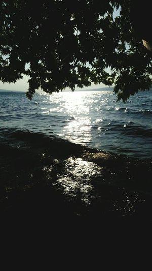 Serdivan Nature Photography Nature Tree Lake Lake View Eventide Sun SAPANCAGÖLÜ