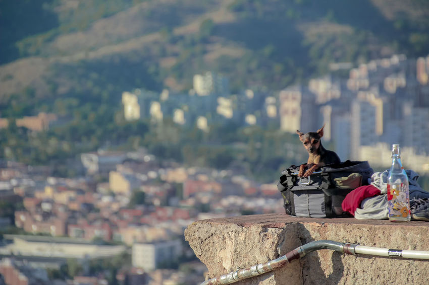 Adapted To The City Building Exterior City City Life Cityscape Cityscape Day Dog Dogs Of EyeEm Dogslife Nature Nature Urban View View Secret Spaces Your Ticket To Europe Go Higher