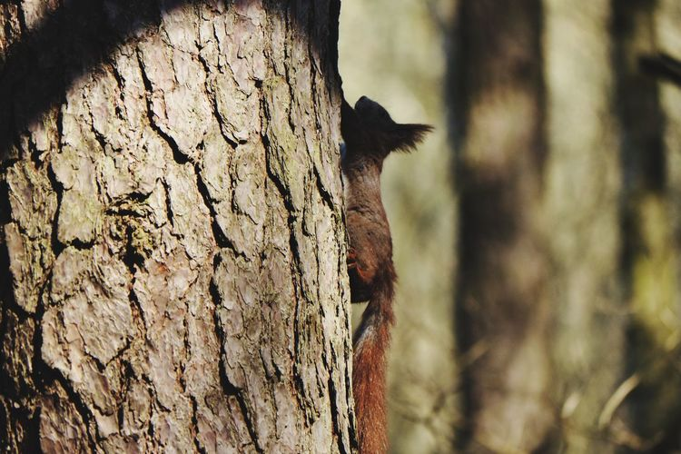 Squirrel Wildlife Shadows & Lights Nature_collection Nature Photography Wildlife & Nature Tree Wilderness Area Wilderness Tree Trunk Close-up