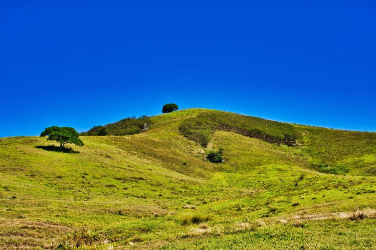 Just a hill Hill Sky Blue Clear Sky Beauty In Nature Plant Scenics - Nature Green Color Land Tranquility Tranquil Scene Nature Landscape Environment Day No People Grass Mountain Idyllic