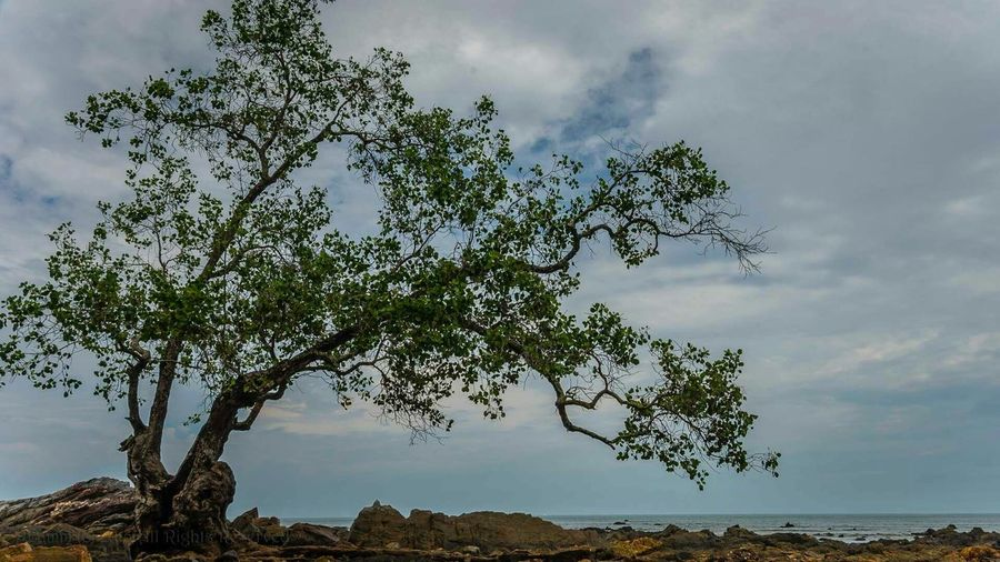 On a rocky shore. Hugging A Tree Seascape Clouds And Sky Intertidal Zone Tanjung Balau Beach Johor Malaysia I