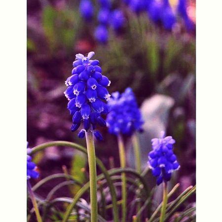 Taking Photos Enjoying Life Nature Czech Flower Purple Lovely Spring