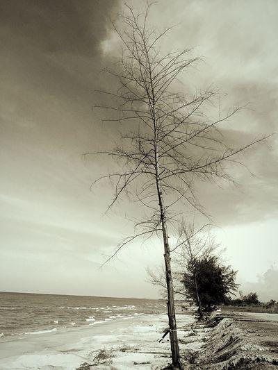 หาดสะก่อม ลมแรง