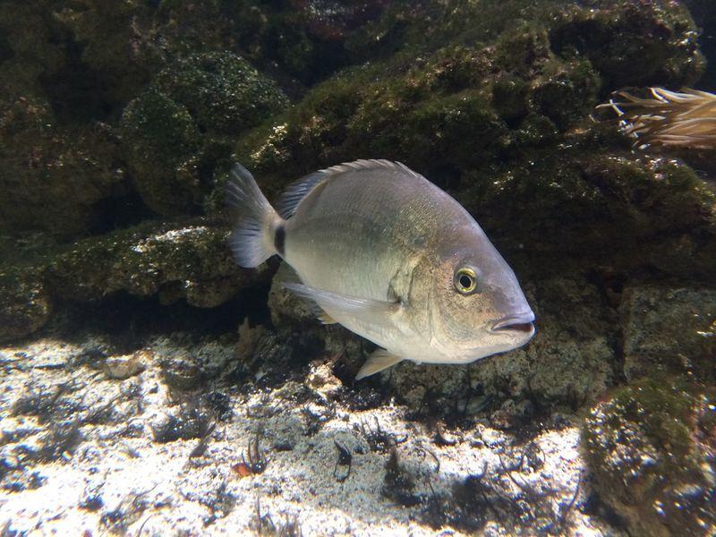 Fish Aquarium Pesce Acquario