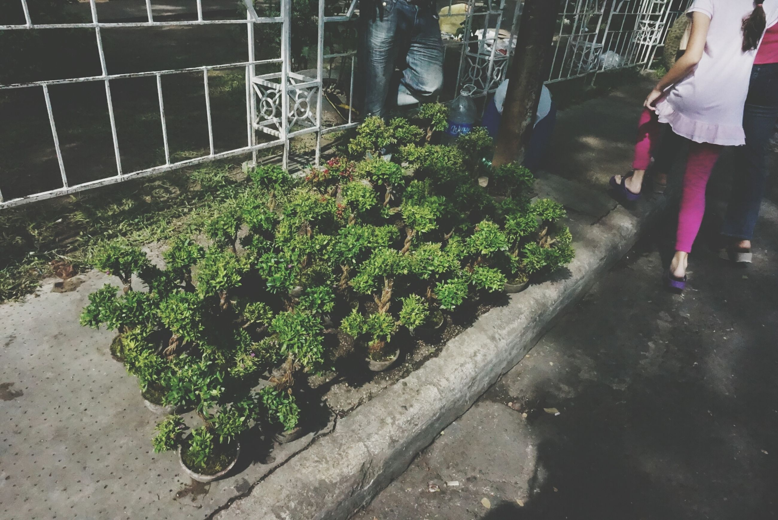 lifestyles, men, leisure activity, low section, person, walking, plant, standing, street, outdoors, high angle view, unrecognizable person, growth, green color, day