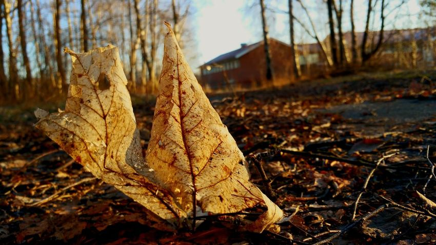 Taking Photos Check This Out Leaf Eyem Göteborg Light Light And Shadow Thinking About Life Autumn Leafs Göteborg Gothenburg Wintertime Winter_collection Winter 2016 A Secret Place