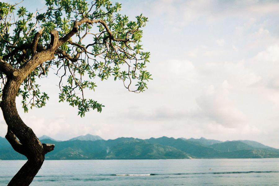 Thriving swell Beach Tree Nature Sea Sky Lombok INDONESIA Film Film Photography Filmisnotdead Seagull205 Fujifilm Fuji400h Nature Outdoors