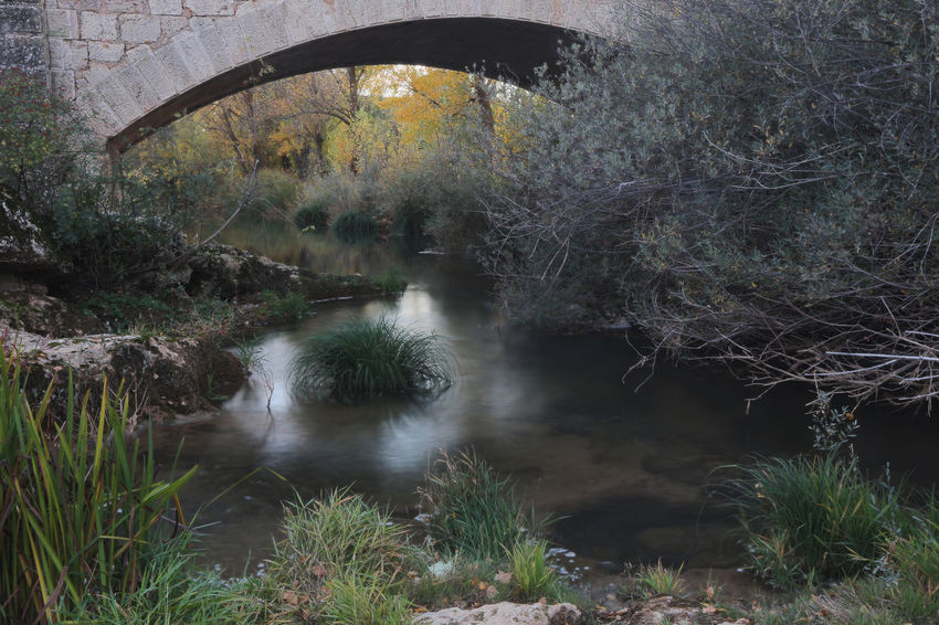 Water Tree Plant Nature Forest River Bridge No People Tranquility Bridge - Man Made Structure Beauty In Nature Arch Architecture Scenics - Nature Built Structure Tranquil Scene Land Day Outdoors Flowing Flowing Water