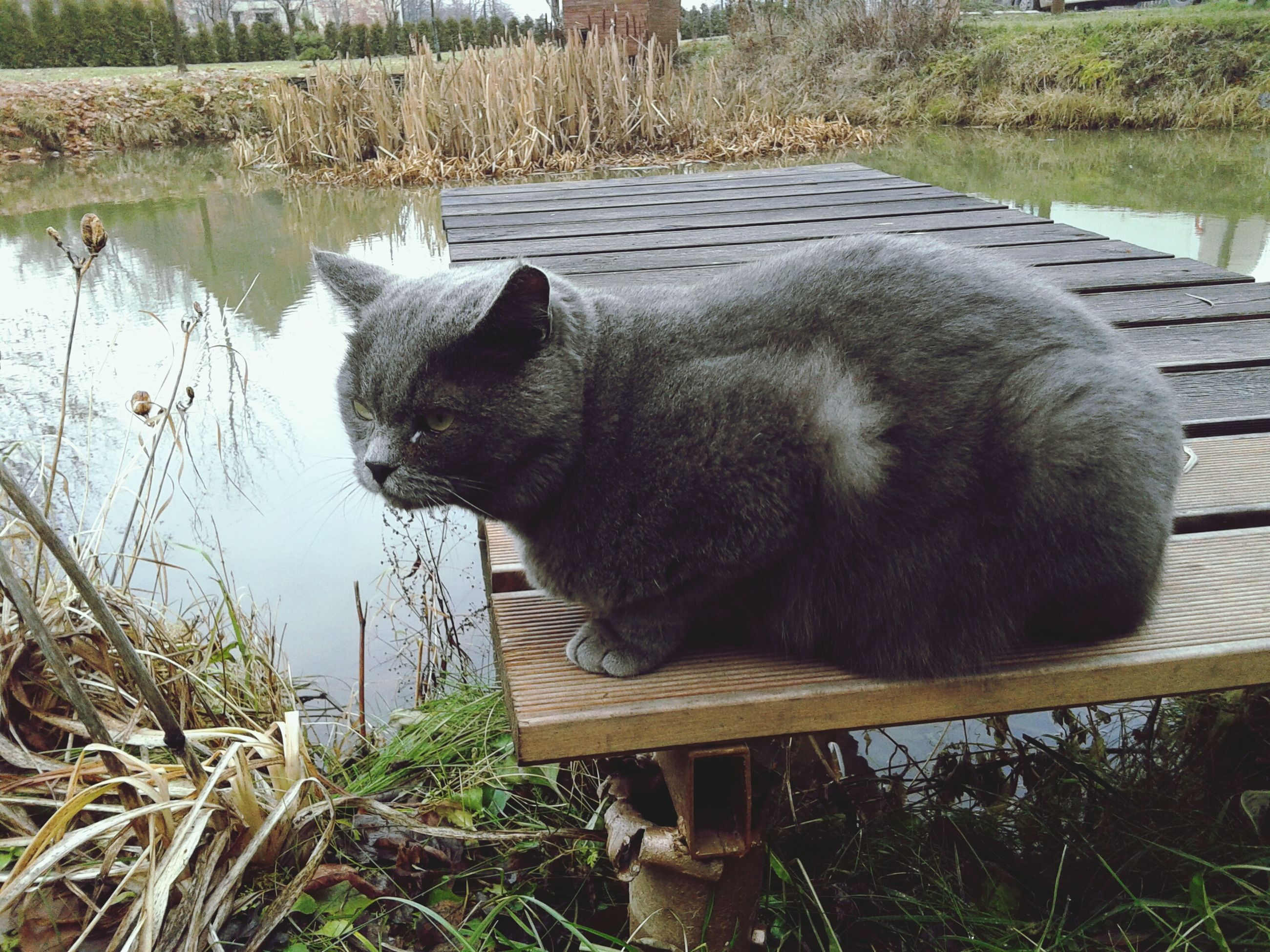 animal themes, one animal, mammal, domestic animals, pets, grass, relaxation, water, lake, domestic cat, nature, outdoors, day, sitting, field, no people, wood - material, feline, cat, plant