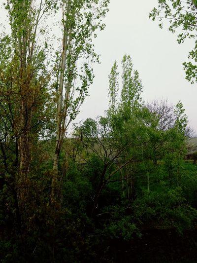 Yeşillik 👟 Huzur♥ Tree Branch Tree Area Water Forest Sky Green Color Rainforest Tropical Rainforest Rainy Season Rainfall Plant Life Foggy Rain