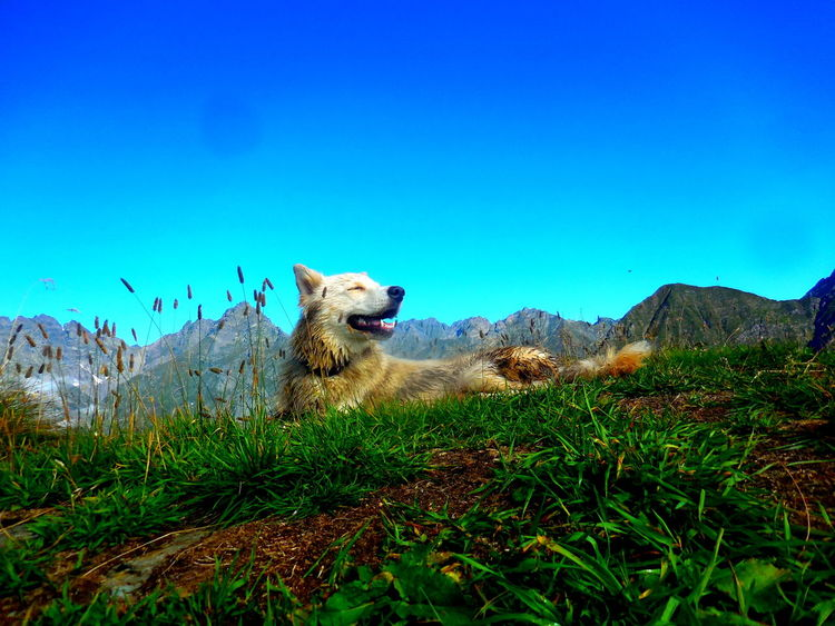 Animal Themes Animals In The Wild Beauty In Nature Blue Cheetah Clear Sky Day Grass Layla Lizzola -BG- Italy Mount Sasna Mountain Nature No People Outdoors Sky Neighborhood Map The Great Outdoors - 2017 EyeEm Awards
