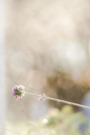Plant Freshness Beauty In Nature Flower Focus On Foreground Flowering Plant Fragility Nature Close-up Vulnerability  Selective Focus Day No People Growth Sunlight Tranquility Outdoors Copy Space Lens Flare Plant Stem Springtime Softness Flower Head