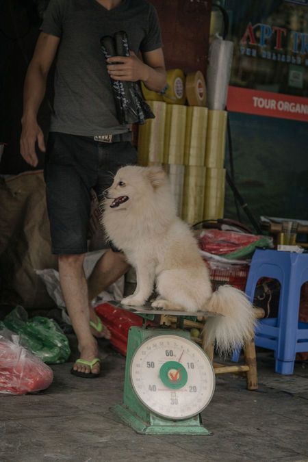 Little dog in Ha Noi, Vietnam Animal Animal Themes Animals In The Wild ASIA Balance Day Dog Doggy Domestic Animals Front View Low Section Mammal Midsection Occupation One Animal One Person Outdoors People Pets Real People Sitting Street Streetphotography Vietnam Vietnamese