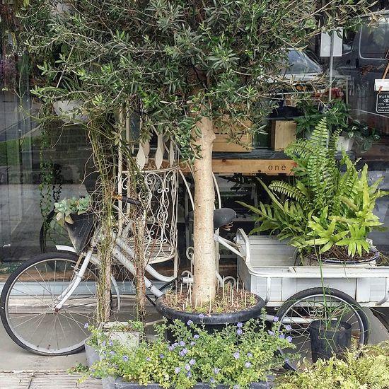 One Olive Charming Florist Plants Tree Flowers Tiong Bahru Singapore