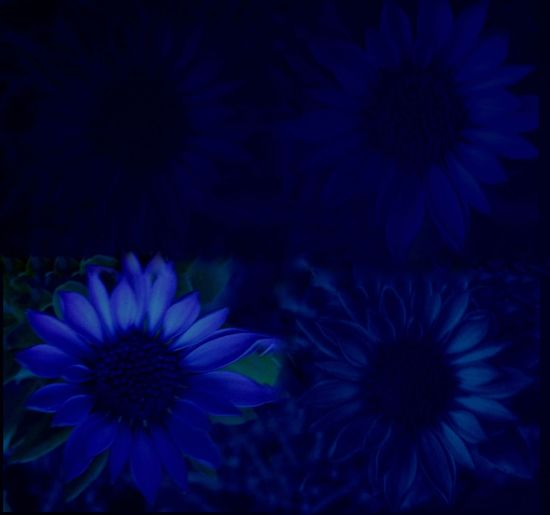 Vibrant Color EyeEmNewHere Overlay Editing Abstract Photography Backgrounds Cold Flower Flower Head Fragility Petal Beauty In Nature Freshness Blue No People Nature Plant Close-up Blooming Growth
