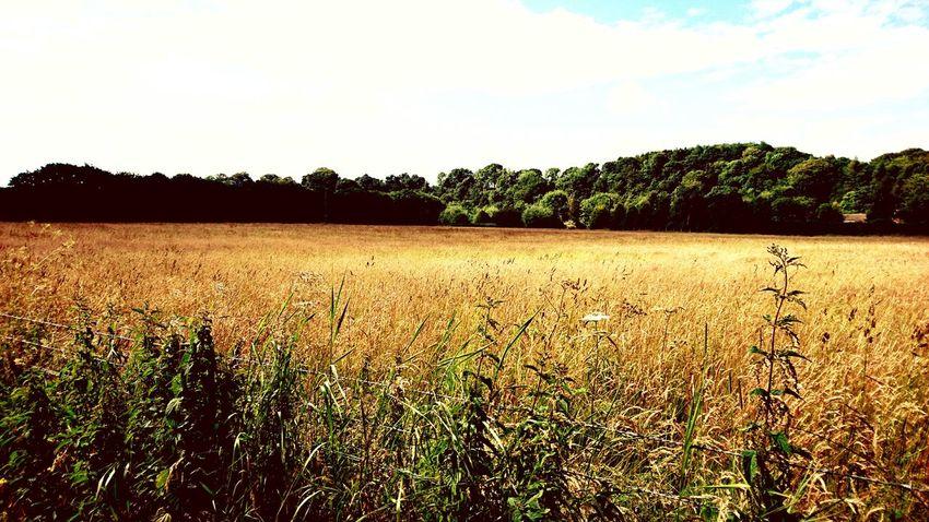 Northumberland Morpeth Countryside England First Eyeem Photo