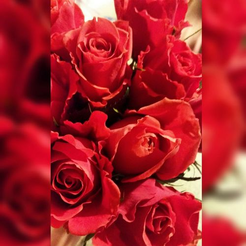 Redroses Flowers Love Cheesy Colors Beautiful