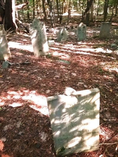 Day Outdoors Shadow Sunlight No People High Angle View Nature Tree Low Section Animal Themes Hidden Cemetary Graveyard Gravestone Cemetery