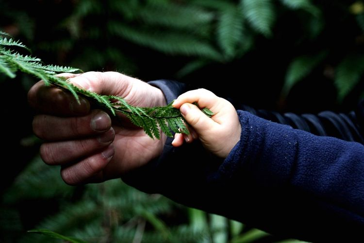 Fern Farn Son Father Father & Son Human Hand Hand Human Body Part Holding Close-up Focus On Foreground People Nature Plant Adult Tree Men Outdoors Body Part Day Finger