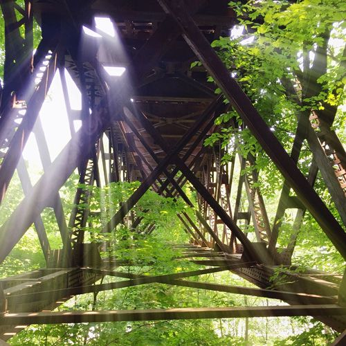 Low angle view of footbridge in forest