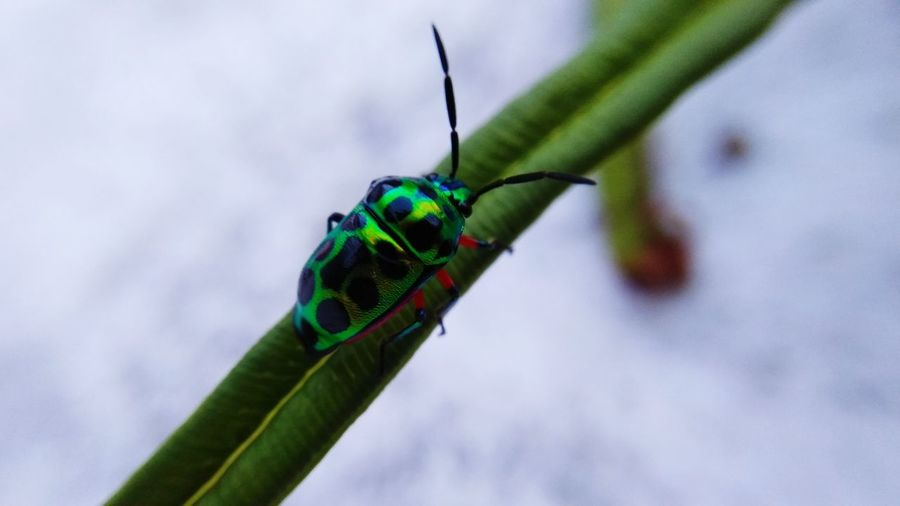 green black bug EyeEmNewHere Damselfly Insect Grasshopper Close-up Animal Themes Green Color Sky Animal Antenna