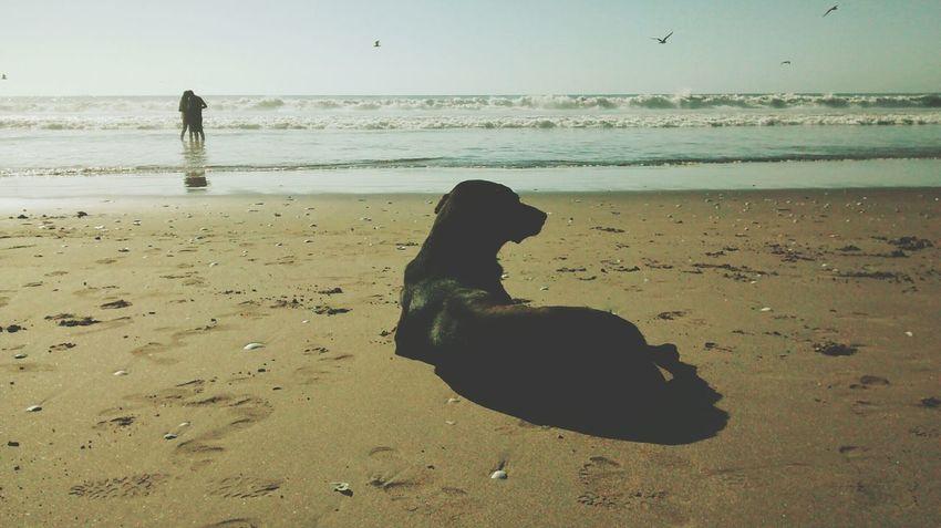 No home! Dogs Beachphotography Sand Sea