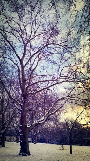 Sun Sky Snow Snowing Winter Sun Winter Trees
