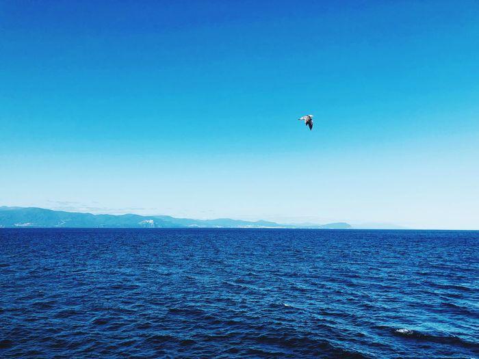 Ishikari Otaru,Hokkaido,Japan EyeEm Selects Sky Sea Water Blue Scenics - Nature Beauty In Nature First Eyeem Photo
