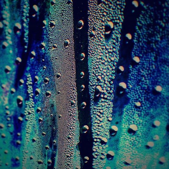Washingtonrain Rainonplastic Rain Raindrops Warmrain Springtime Spring Raining Saturatedcolor Saturatedfilm Rainbow Springshowers Artist Littledetails Juxtaposition Art Highcontrast Muse Minx