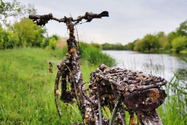 Close-up of driftwood on field by lake