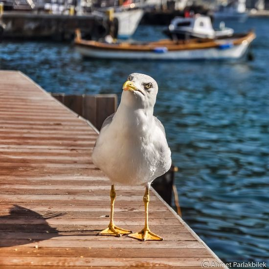 Whats up? Animals In The Wild Bird Animal Themes Seagull One Animal Wildlife Nautical Vessel Water Zoology Vertebrate Sea Close-up Perching Transportation Full Length Boat Beak Focus On Foreground Harbor Sea Bird