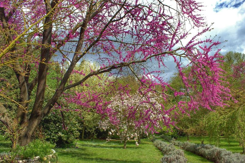 Giardini Di Ninfa EyeEm Nature Lover EyeEm Best Shots - Nature EyeEm Blossom Eyeem Bloom Trees In Bloom Trees In Blossom