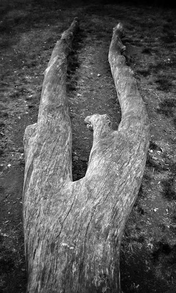 Tree branch Hugging A Tree Streetphotography Check This Out Taking Photos Cheese! Wandle Park Nature , Spring, Beautiful B&w Photo