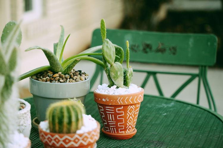 Aloe Bistro Cacti Cactus Green Patio Plants Retro Succulents Aloe Vera Plant Daylight No People Outdoors Outside Potted Plant Terracotta