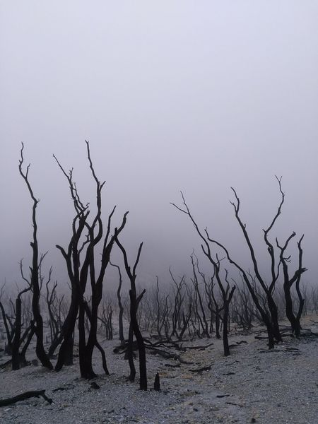 The dead forest Dead Forest Volcano Cloud Hot Cold Papandayan The Top  Mountain Smoke Nature Landscape Tree Bare Tree Forest Fire
