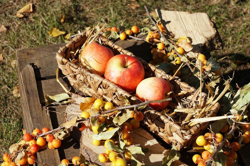Autumn Rustic Thanksgiving Apple Apple - Fruit Apples Basket Food Food And Drink Fruit Harvest No People Organic Outdoors Sunlight