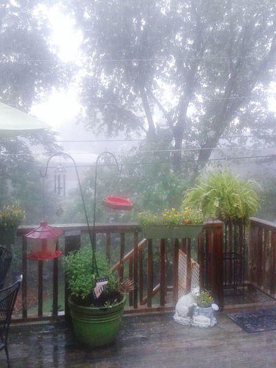 Thunderstorm Secret Garden Relaxing
